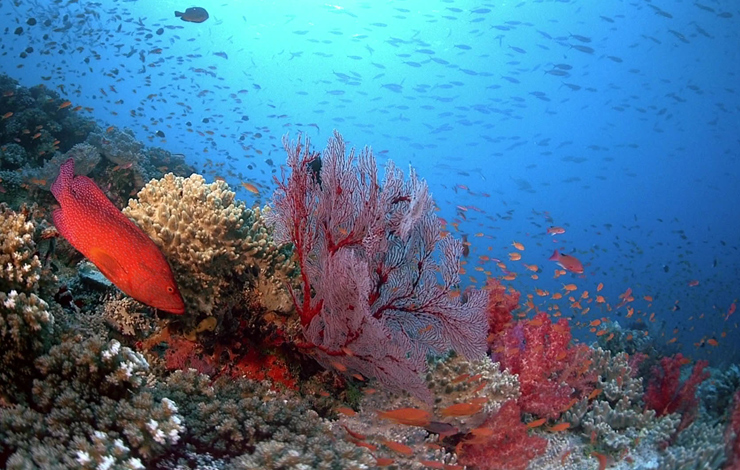 A healthy coral reef in Fiji, from <em>Coral Reef Adventure</em>.