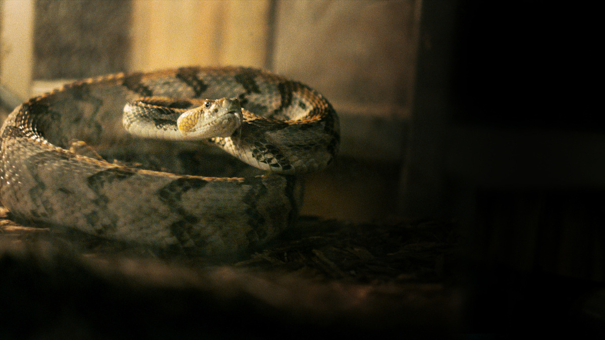 From Theo Love's 'Alabama Snake,' which airs december 9 on HBO. Courtesy of HBO