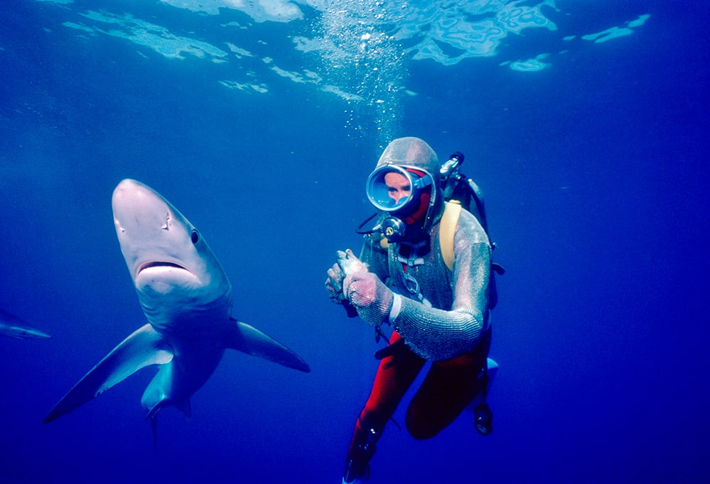 An underwater photo from 1982, of Valerie Taylor, a white woman, in a chain mail suit. There is a shark right in front of her. Courtesy of Ron & Valerie Taylor.
