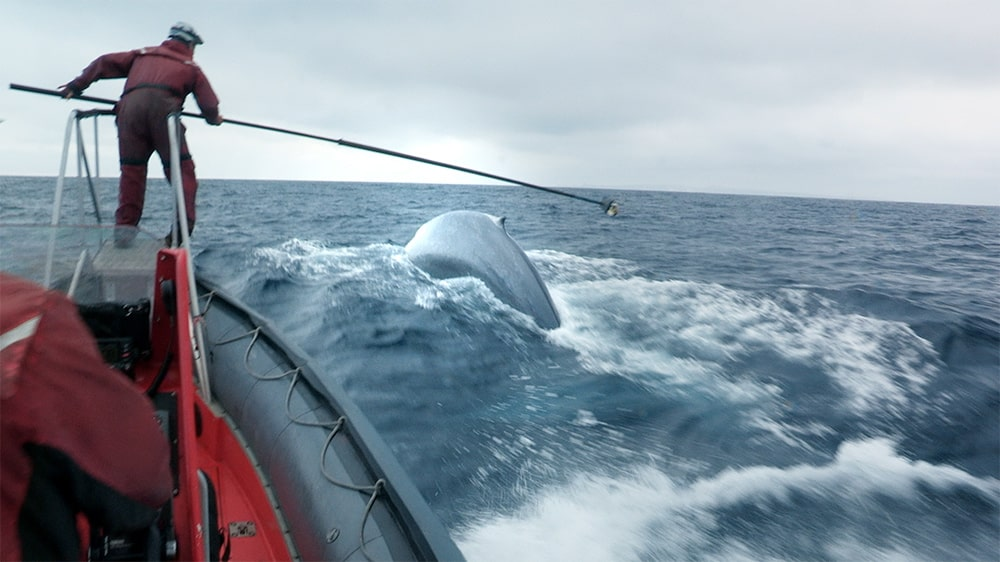 A cameraperson standing in a boat filming a blue whale in the ocean. A near miss captured by the Canon XF305 camcorder. Courtesy of Bleecker Street.