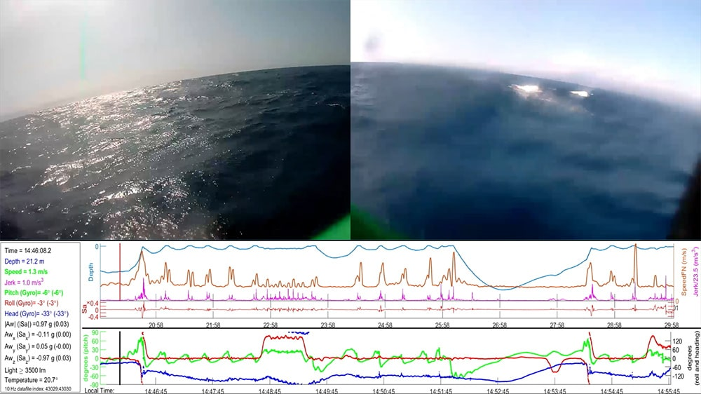 A triptych of three photos. Two views of the sea and a graph charting nearby whales. What the tag captures: two camera views plus monitoring data. Courtesy of Bleecker Street.