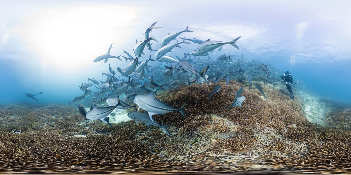 """From Jeff Orlowski's """"Chasing Coral: The VR Experience."""""""