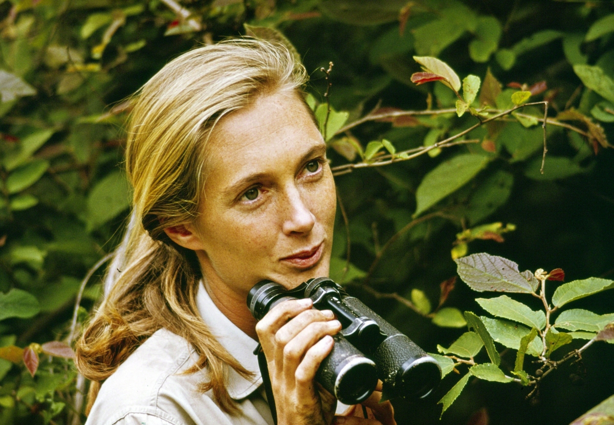 Jane Goodall, in 'Jane.'