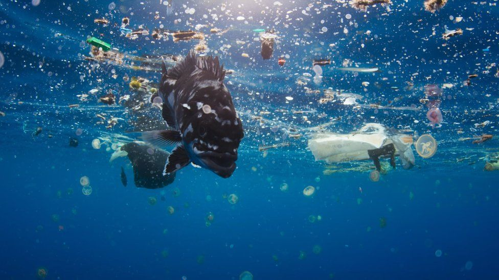 Plastic on Blue Planet II BBC