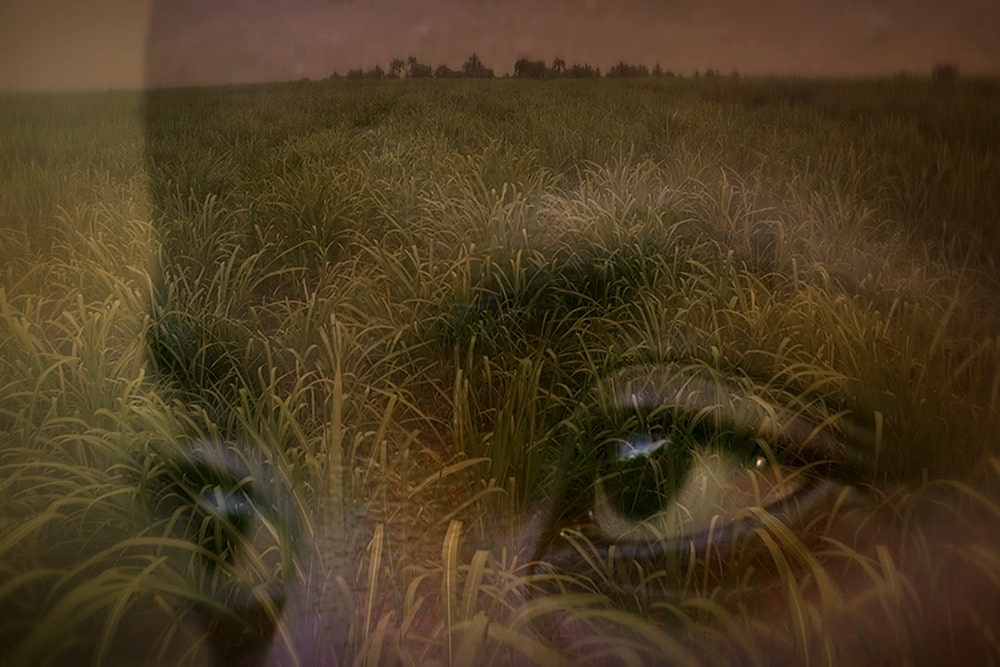 Superimposed image of a pair eyes against sugar fields. From Michele Stephenson's 'Stateless.' Courtesy of National Film Board of Canada.