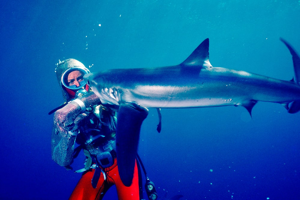 An underwater color photograph from 1982 of Valerie Taylor, a white woman, wearing a chain mail suit, being bitten on the arm by a shark. Her pants are red and the top is sparkly. Courtesy of Ron & Valerie Taylor.