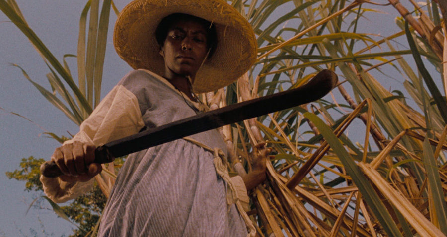 Actor Oyafunmike Ogunlano is a Black woman standing against a sugarcane plant with a sickle in hand in Haile Gerima's 'Sankofa' (1993). Image courtesy of Array Releasing.
