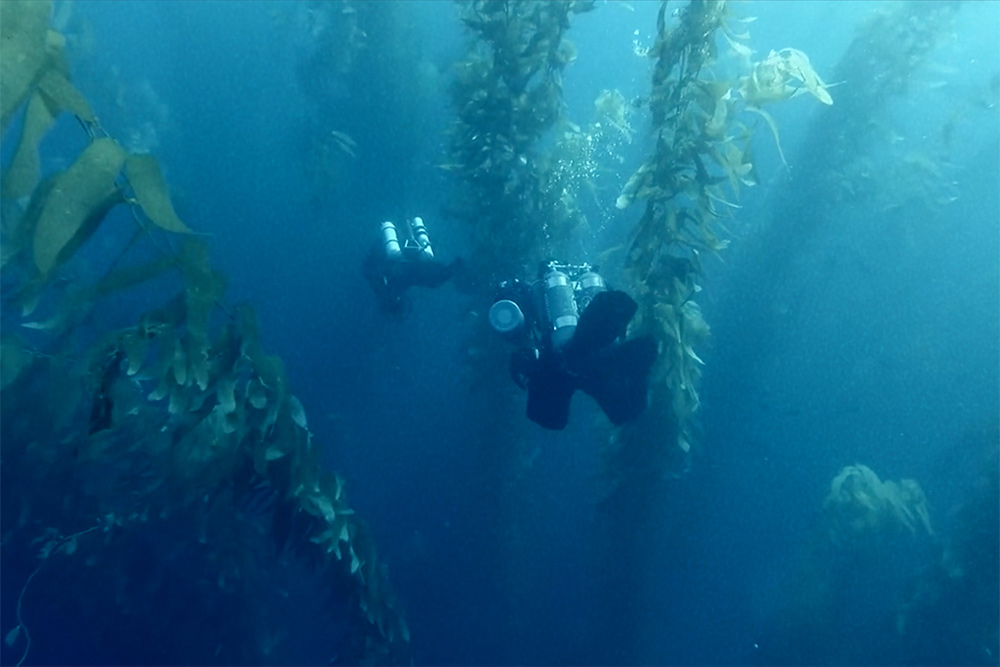Two underwater camera people amidst seaweeds. A scene from 'The Loneliest Whale,' directed by Joshua Zeman. Courtesy of Bleecker Street.