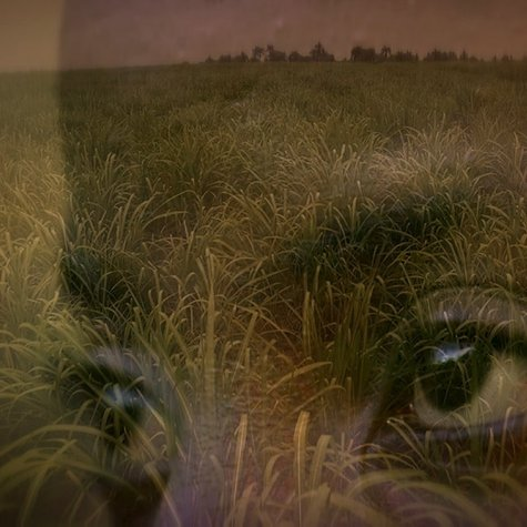 """Superimposed image of a pair eyes against sugar fields in an image from """"Stateless"""". Courtesy of National Film Board, Canada."""