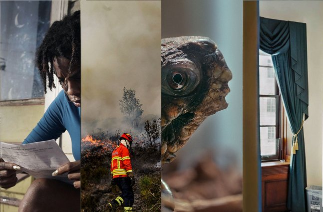 A collage of stills from four TIME Studios shorts.