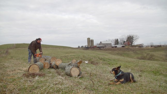 A man is cutting a log in a pasture.