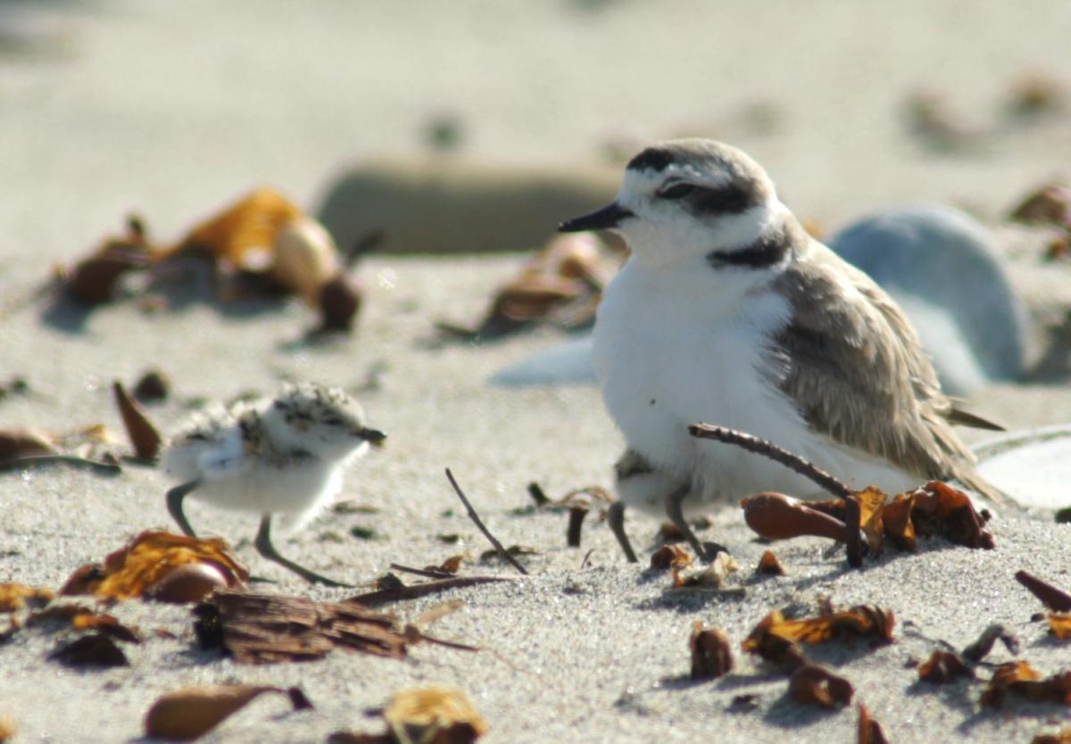 A bird is sitting on the beach.