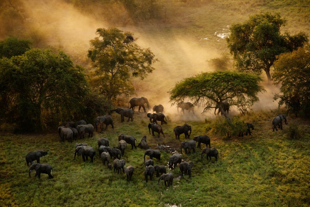 a herd of elephants walk through the grasslands.