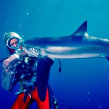 An underwater color photograph from 1982 of Valerie Taylor, a white woman, wearing a chain mail suit being bitten on the arm by a shark. Her pants are red and the top is sparkly. Courtesy of Ron & Valerie Taylor.