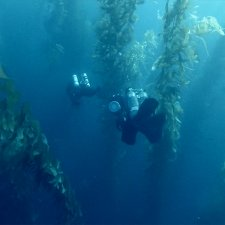 Two underwater cameras amidst seaweeds. An underwater scene from 'The Loneliest Whale,' directed by Joshua Zeman. Courtesy of Bleecker Street.