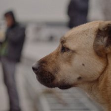Side portrait of a dog from Elizabeth Lo's 'Stray,' a Magnolia Pictures release. Courtesy of Magnolia Pictures