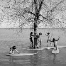 A group of children are playing on surf boards on a lake next to a tree