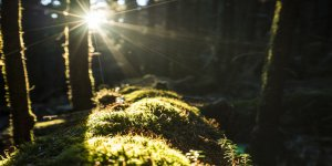 sun shines into the forest canopy